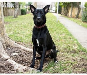 dogparkequipment_homepage_isis
